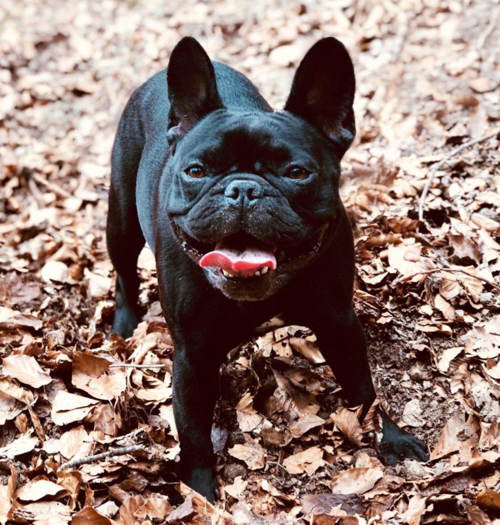 Portrait Mode Refinements – ORA DOG